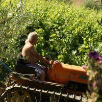 azienda agricola (1)